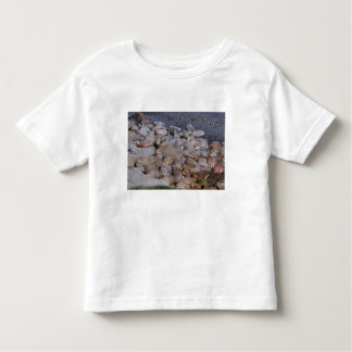 Asia, Russia, Siberian Arctic, Bering Sea, Tee Shirts