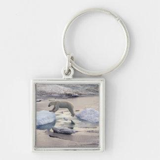 Asia, Russia, Siberian Arctic. Polar bear Key Chain