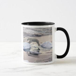 Asia, Russia, Siberian Arctic. Polar bear Mug