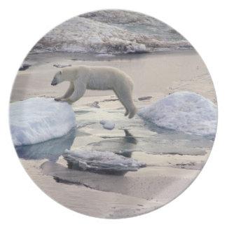 Asia, Russia, Siberian Arctic. Polar bear Party Plates