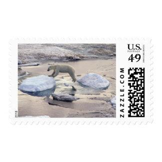 Asia, Russia, Siberian Arctic. Polar bear Postage