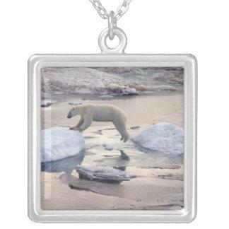 Asia, Russia, Siberian Arctic. Polar bear Square Pendant Necklace