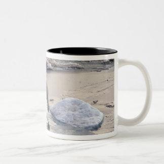 Asia, Russia, Siberian Arctic. Polar bear Two-Tone Coffee Mug