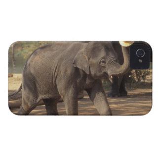 Asia, Tailandia, inclinación de Lampang con el gor iPhone 4 Case-Mate Carcasas