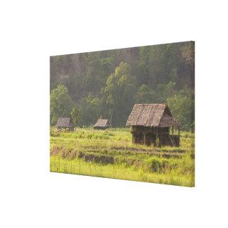 Asia, Thailand, Mae Hong Son, Rice huts in the Canvas Print