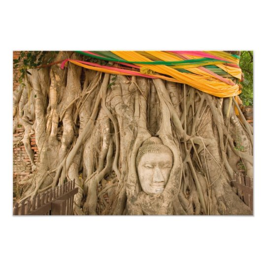 Asia, Thailand, Siam, Buddha in tree ruts at Photo Print