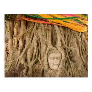 Asia, Thailand, Siam, Buddha in tree ruts at Postcard
