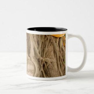 Asia, Thailand, Siam, Buddha in tree ruts at Two-Tone Coffee Mug