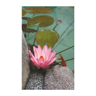 Asia, Vietnam. Water lily in a temple pond Canvas Print