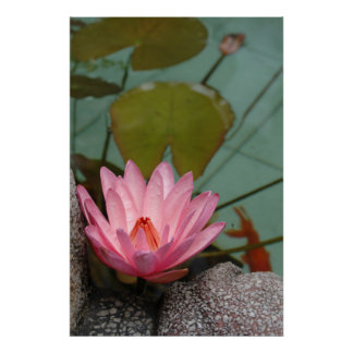 Asia, Vietnam. Water lily in a temple pond Poster