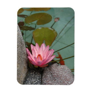 Asia, Vietnam. Water lily in a temple pond Rectangular Photo Magnet