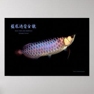 Asian Arowana ` Blue Type' Poster
