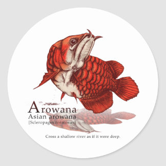 Asian arowana - flare