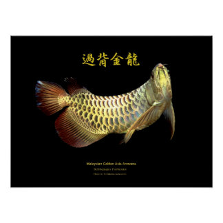 "Asian Arowana ""Golden Type"" Poster"