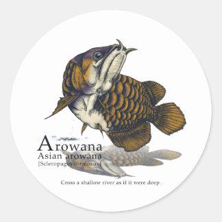 Asian arowana - navy