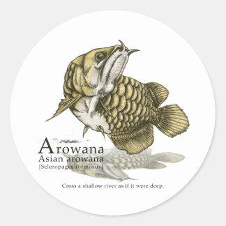 Asian arowana - plain