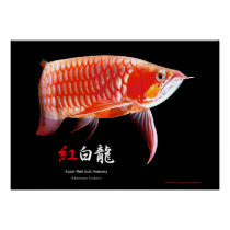 Asian Arowana (Red Type) Poster