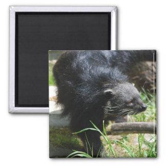 Asian Bearcat Magnet