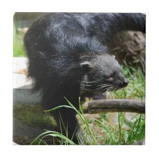 Asian Bearcat Tile