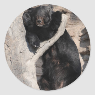 Asian Black Bear Classic Round Sticker