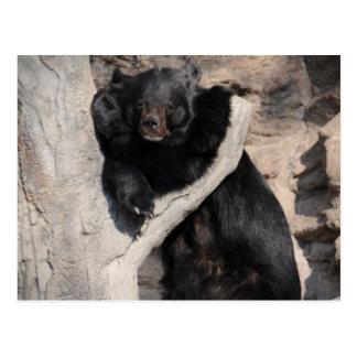 Asian Black Bear Postcard