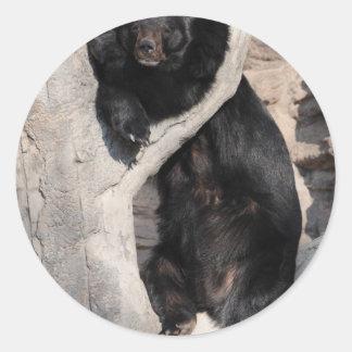 Asian Black Bear Round Stickers