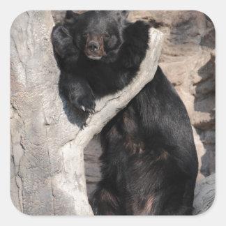 Asian Black Bear Sticker