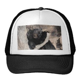 Asian Black Bear Trucker Hat