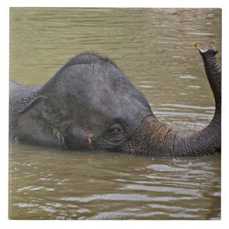 Asian Elephant bathing, Thai Elephant Ceramic Tile