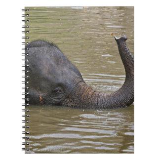Asian Elephant bathing, Thai Elephant Notebook