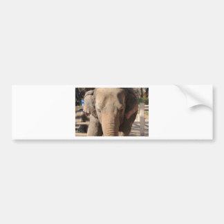 Asian Elephant Bumper Sticker