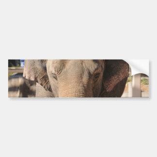 Asian Elephant Bumper Stickers