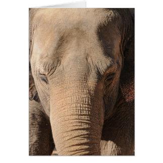 Asian Elephant Cards