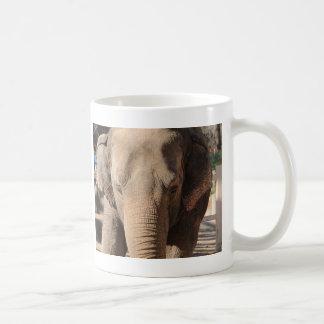 Asian Elephant Coffee Mugs
