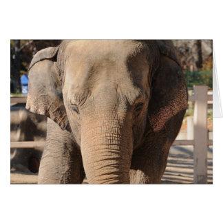 Asian Elephant Greeting Card