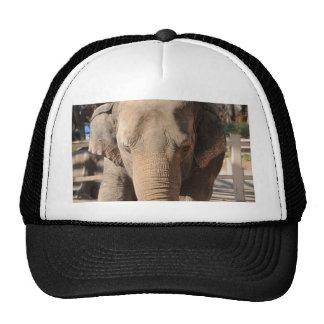 Asian Elephant Hat