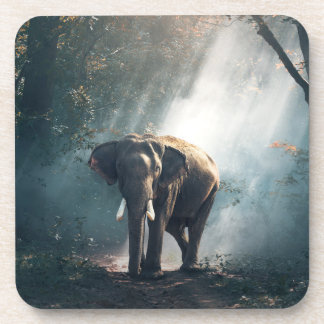 Asian Elephant in a Sunlit Forest Clearing Beverage Coaster