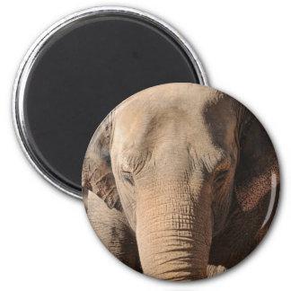 Asian Elephant Magnets