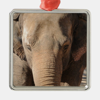 Asian Elephant Ornament