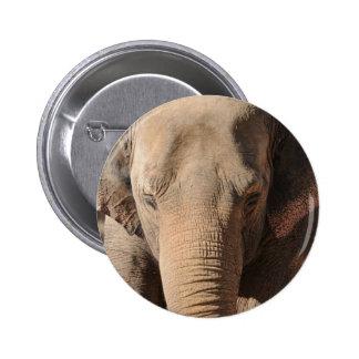 Asian Elephant Pinback Buttons