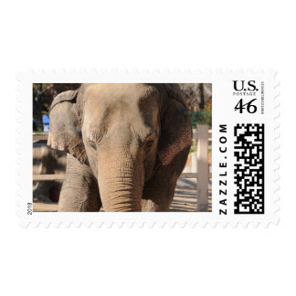 Asian Elephant Postage Stamp