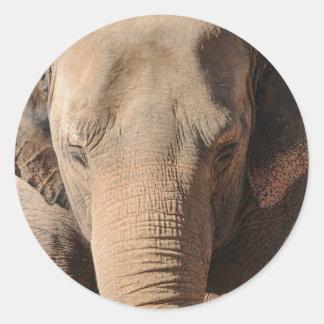 Asian Elephant Round Sticker
