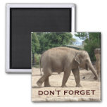Asian Elephant Save The Date Magnet