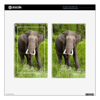 Asian Elephant Kindle Fire Decals