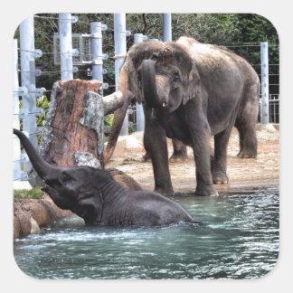 Asian Elephant Square Sticker