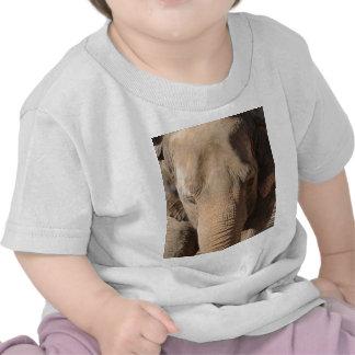 Asian Elephant Tees