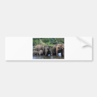 Asian elephants in river Sri Lanka Bumper Sticker