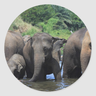 Asian elephants in river Sri Lanka Classic Round Sticker
