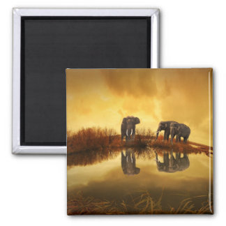 Asian Elephants in Thailand under a glowing sunset Magnet