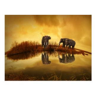 Asian Elephants in Thailand under a glowing sunset Postcard